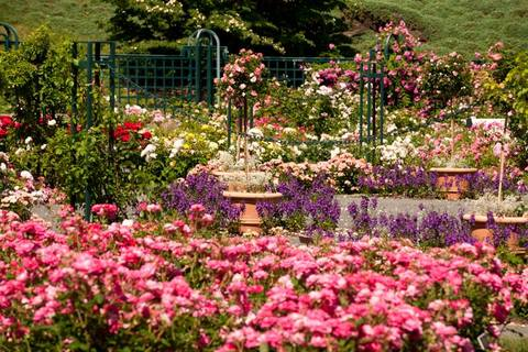 New_York_Botanical_Garden_large